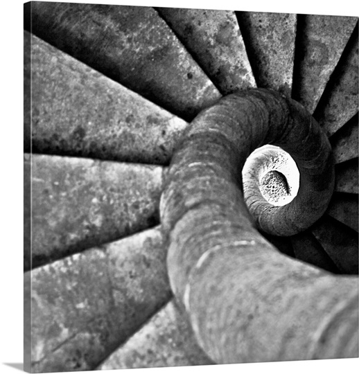 Black and white image of snail.