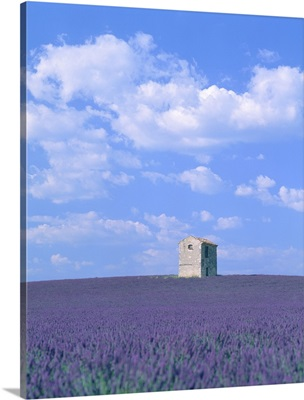 Blooming Lavender And Stone House In France