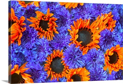 Blue Bachelor's Buttons And Orange Sunflowers