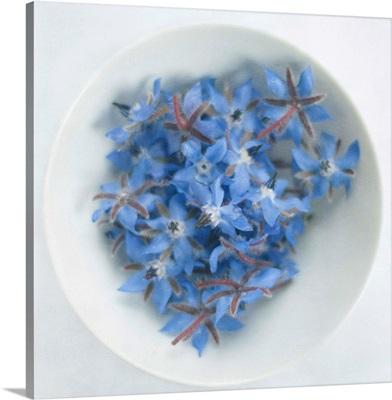 Blue borage (borago officinalis) flowers in white bowl.