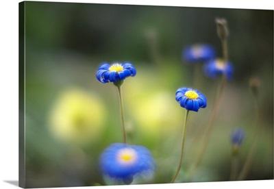 Blue flowers in garden.