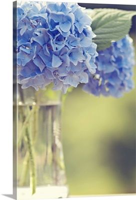 Blue hydrangea flowers soft, ethereal, offset in glass vase, delicate, astanse.