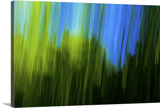 Blue sky seen from inside forest, blurred motion Wall Art, Canvas ...