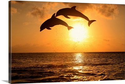 Bottle-nosed dolphins leaping in front of a sunset