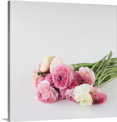 Bouquet of ranunculus lying on white background.