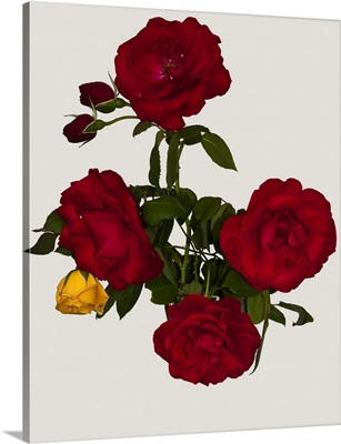 Bouquet of red and yellow roses.
