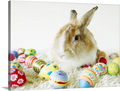 Bunny Rabbit Sitting Among Easter Eggs