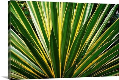 Cactus Leaves At Casa Orquideas Botanical Garden