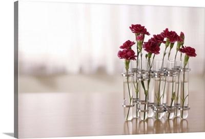 Carnations flowers kept in glasses on table.