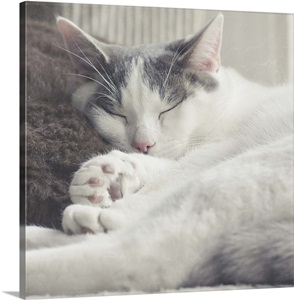Cat Sleeping On Couch Leaning His Head Against Brown Cushion Wall Art Canvas Prints Framed