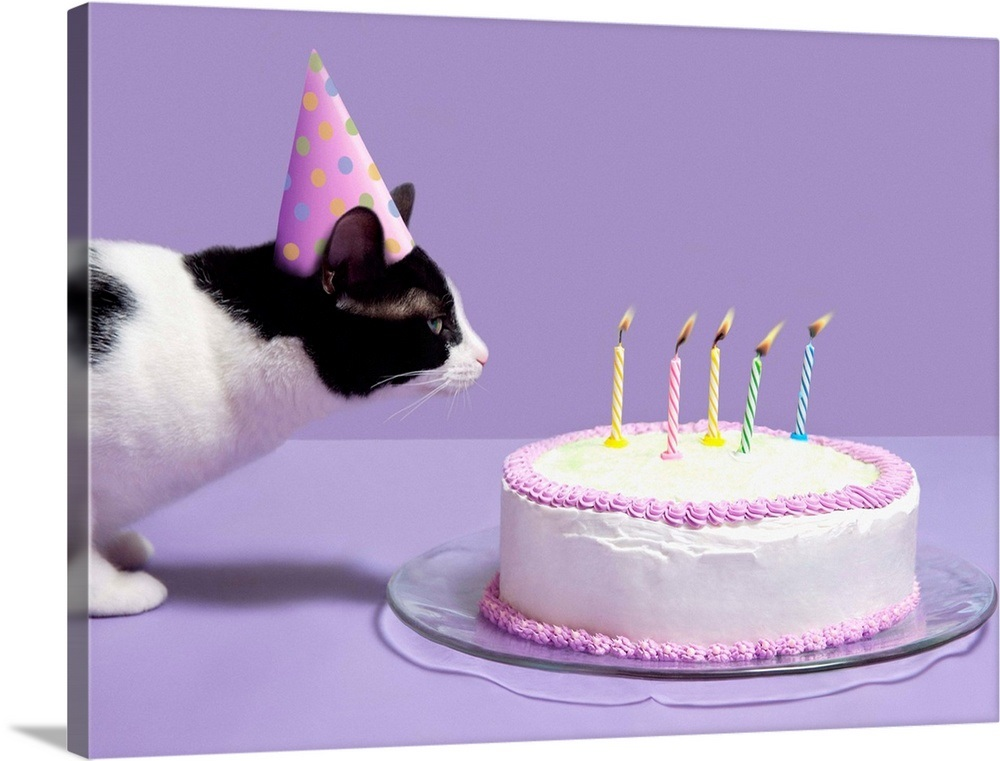 Cat Wearing Birthday Hat Blowing Out Candles On Birthday Cake Wall