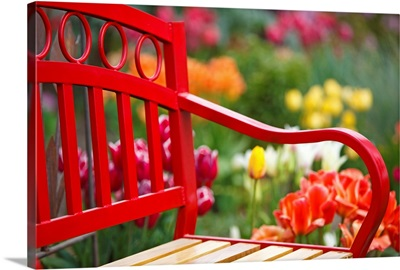 Chair In Tulip Field