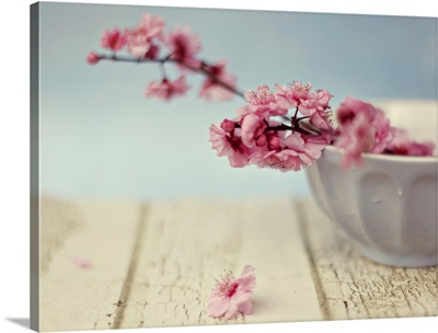 Cherry blossoms in bowl.