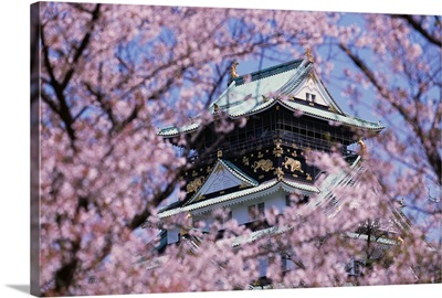 Cherry Blossoms In Front Of Osaka Castle