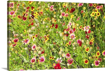 Close-up of colorful wild flowers in a field