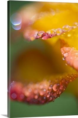 Close up of dew drops