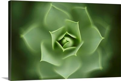 Close up of green Euphorbia