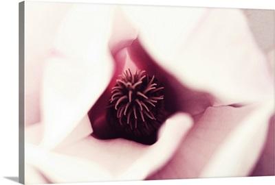 Close up of magnolia blossom.