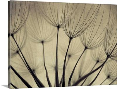 close up shot of dandelion seeds.