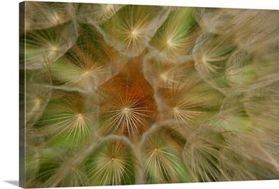 Closeup of a salsify plant.