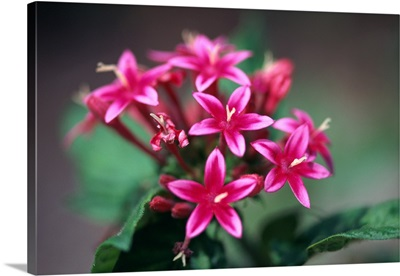 Cluster of pink flowers
