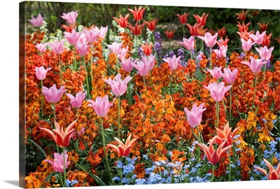 Colorful Flowers In St. James'S Park