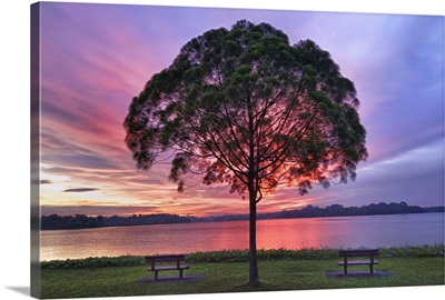 Colorful light seen behind tree is spectacle.