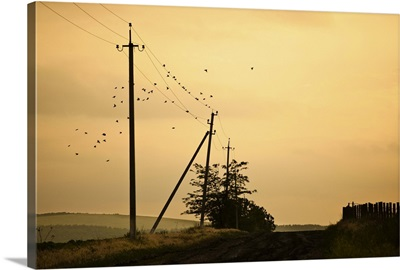 Countryside road with birds over electricity poles, at sunset, Moldova.