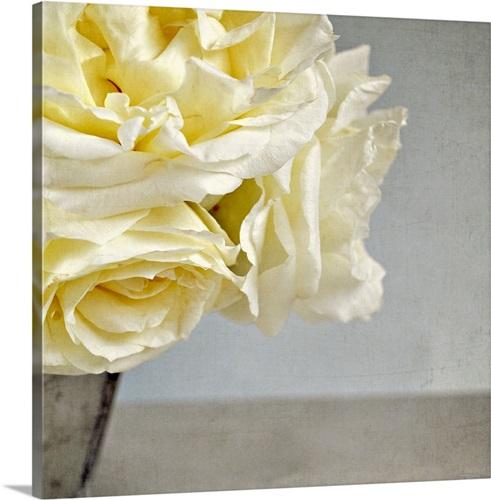 Cream vanilla roses in silver vase against Grey/blue background ...