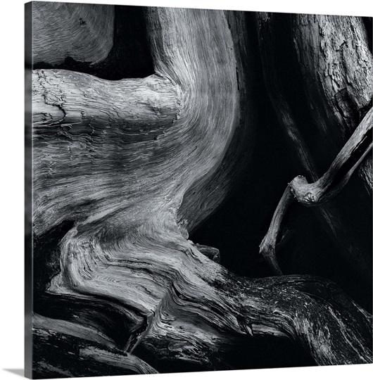 Dead tree trunk wall art canvas prints framed prints for Tree trunk wall art