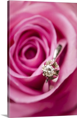 Diamond engagement or wedding ring between petals of real pink rose.