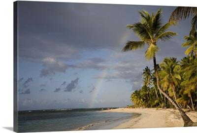 Dominican Republic, Puerto Plata, rainbow over palm trees on beach