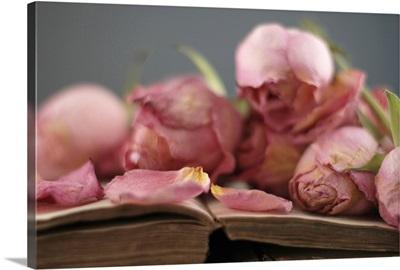 Dried pink roses on vintage book.