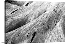 Driftwood, Jekyll Island, Georgia