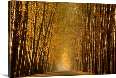 Empty Road in a forest, Srinagar, India