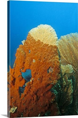 Fan coral covered by orange sea sponge madagascar wall art canvas fan coral covered by orange sea sponge madagascar publicscrutiny Choice Image