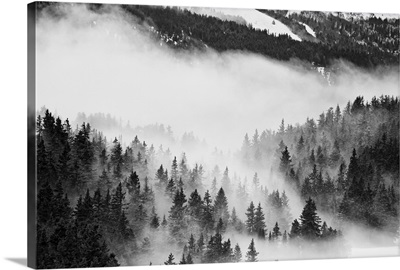 Fast moving clouds, passing between trees in a forest in Chamrousse in the french Alps.