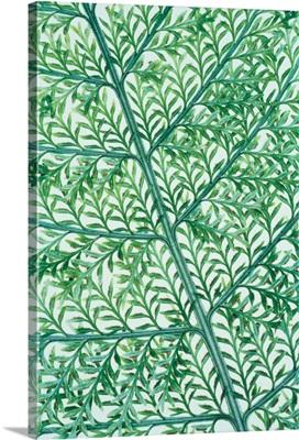 Fern Leaf Vein