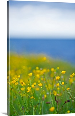 Field of flowers in front of the sea