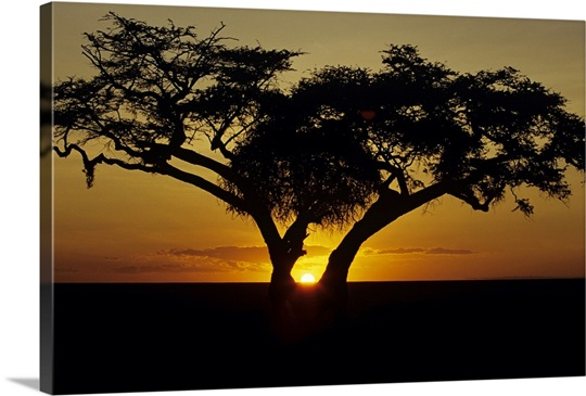 Tree Canvas Wall Art fig tree silhouetted at african dawn, kenya, africa wall art