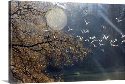 Flight of birds at winter.