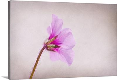 Flower lit by natural light.
