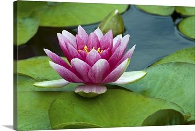 Flower, Water, Bloom, Beauty
