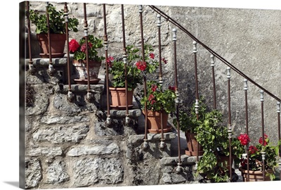 Flowering red geranium potplants, on the stairs on an old medieval house.