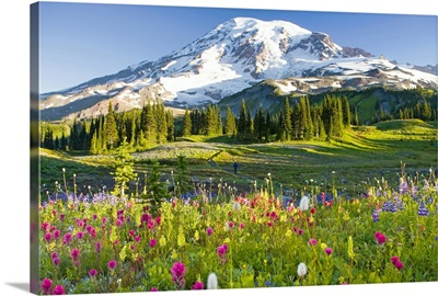 Flowers are purple arctic lupine, Magenta Paintbrush and Beargrass