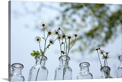 Flowers in antique glass bottle vases, outdoors, close-up