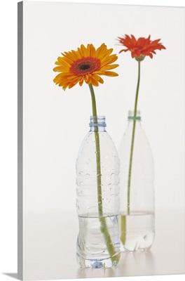 Flowers in water bottles