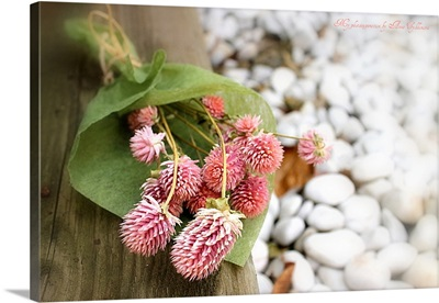 Flowers with pebbles in background.