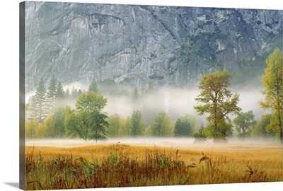 Fog in a forest, Yosemite National Park, Mariposa County, California, USA