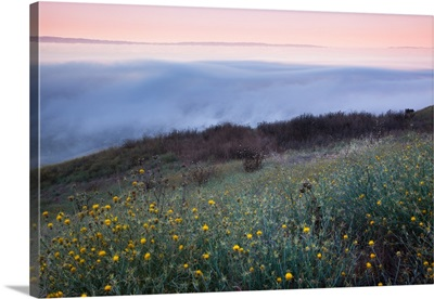 Fog on hills with wild flower at sunrise.